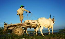 Rural vietnamien étonnant, asiatique, chariot de vache Image stock