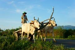 Rural vietnamita asombroso, asiático, carro de la vaca Imágenes de archivo libres de regalías