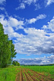 Rural view. Summer rural view landscape background Royalty Free Stock Image