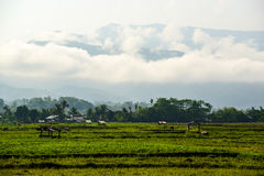 Rural view in a foggy day Stock Photos