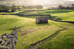 Rural view with meadows, sheep, dry stone walls and a traditiona Stock Images