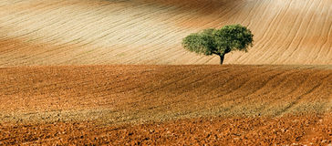 Rural view3. Relaxing composition with a tree standing on the middle of a field royalty free stock photo