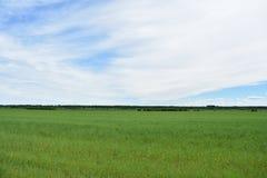 Free Rural Village Field Green Lush Grass Sky Clouds Stock Photos - 151412653