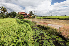Rural village house in paddy field - Series 2 Royalty Free Stock Image