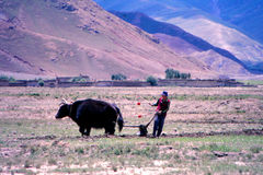 Rural village life in Tibet Royalty Free Stock Photography