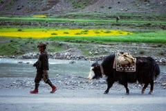 Rural village life in Tibet Royalty Free Stock Image