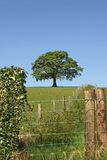 Rural Vista. Wood and wire fencing with an oak tree in summer in full leaf on the far horizon against a blue sky Royalty Free Stock Image