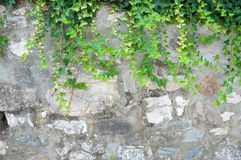 Rural wall. Background cracked and damaged Royalty Free Stock Photography