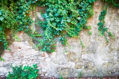 Rural wall. Background cracked and damaged Royalty Free Stock Image