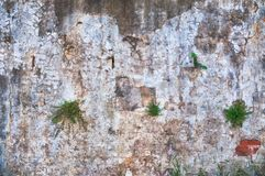 Rural wall. Background cracked and damaged Royalty Free Stock Photo