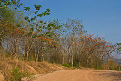 Rural way. To huay ma now dam chiangmai thailand Royalty Free Stock Photos