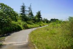 Rural way in weeds of sunny summer Stock Photo