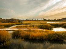 Rural wetland Royalty Free Stock Photos