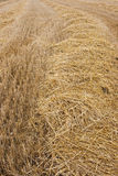Rural wheat Royalty Free Stock Photography