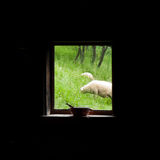 Rural window view Royalty Free Stock Photos