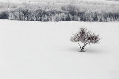 Rural winter day landscape. With a tree royalty free stock photography