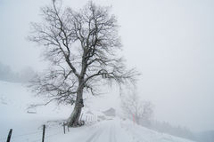 Rural winter landscape. Lonely tree on the rural road in Swiss Alps. Winter, snow drift, foggy weather. A house and other trees in the background. Near Engelberg Stock Photo
