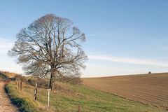 Rural winter landscape Royalty Free Stock Photo