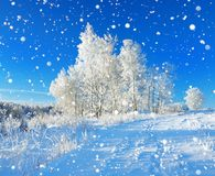 Rural winter landscape a with blue sky, a field and forest Royalty Free Stock Images