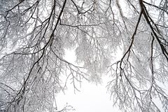 Rural winter landscape with forest and snow. Royalty Free Stock Photography