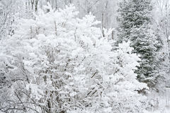 Rural winter landscape with forest and snow. Royalty Free Stock Photos