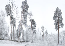 Rural winter landscape with forest and snow. Royalty Free Stock Images