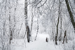 Rural winter landscape with forest and snow. Stock Photos