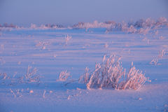 Rural winter landscape of meadow under snow at early morning tim Royalty Free Stock Image