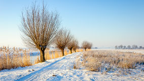 Rural winter landscape in the Netherlands Stock Photography