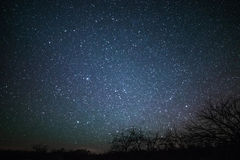Rural Winter Landscape at night with trees and stars Royalty Free Stock Photography