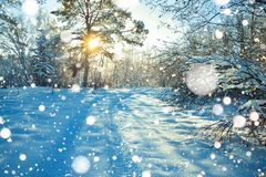 Rural winter landscape with sunset, the forest and the road Stock Photo