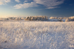Rural winter landscape with white frost on field and forest Stock Photos