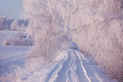 Rural winter landscape with white frost on field and forest Royalty Free Stock Images