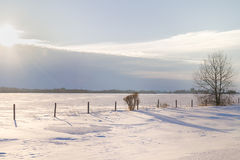 Rural winter landscape. White landscape of snow and a tree under a cloudy sky Stock Images