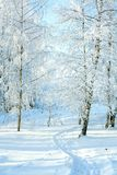 Rural winter snowy landscape with forest, footpath and blue sky. Trees covered with snow. wintry frosty day stock images