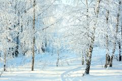 Rural winter snowy landscape with forest, footpath and blue sky. Trees covered with snow. wintry frosty day royalty free stock photos