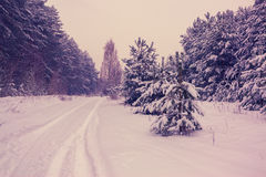 Rural winter snowy landscape Royalty Free Stock Photography