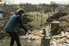 A rural woman shoots an ash tree wood for harvesting for the winter with an ax royalty free stock image