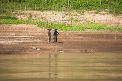 Rural women planting at farmland along Mekong river. Laos Stock Photos