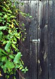 Rural wooden door, covered with leaves. stock image