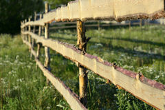 Rural wooden hedge fence corral. Royalty Free Stock Image