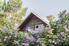 Rural wooden house in the lilacs Stock Photos