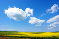 Rurality. Under the blue sky and white clouds, the beautiful rurality Stock Photography