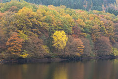 Rursee during fall in National Park Eifel, Germany. Royalty Free Stock Images