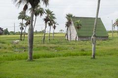 Rurual scenic, Cuba Royalty Free Stock Photo