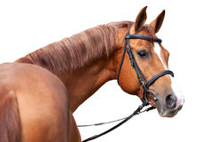 Rus trekt paard aan Royalty-vrije Stock Foto's