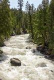 rusa för flod Arkivfoto