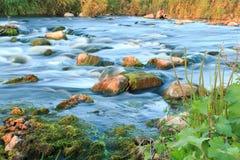 rusa för flod Royaltyfria Bilder