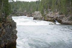 rusa för flod Arkivbild