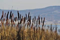 Rusa på sjön i natur Royaltyfria Foton
